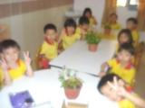 projplantsapril13-006