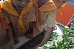 Six Years Old Science - Rainforest 1 (Jan 2019)